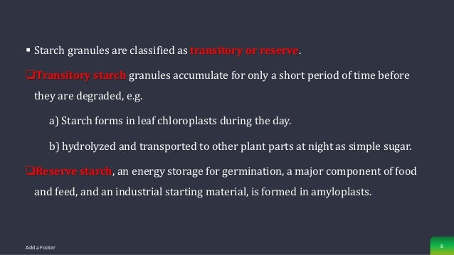  Starch granules are classified as transitory or reserve. Transitory starch granules accumulate for only a short period ...