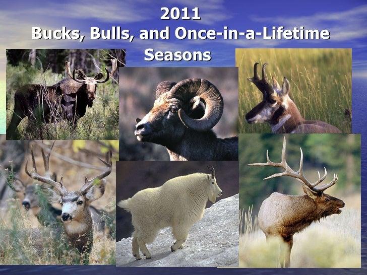 2011 Bucks, Bulls, and Once-in-a-Lifetime Seasons