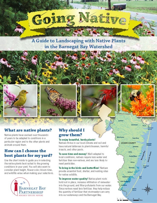 A Guide to Landscaping with Native Plants                                in the Barnegat Bay WatershedWhat are native plan...