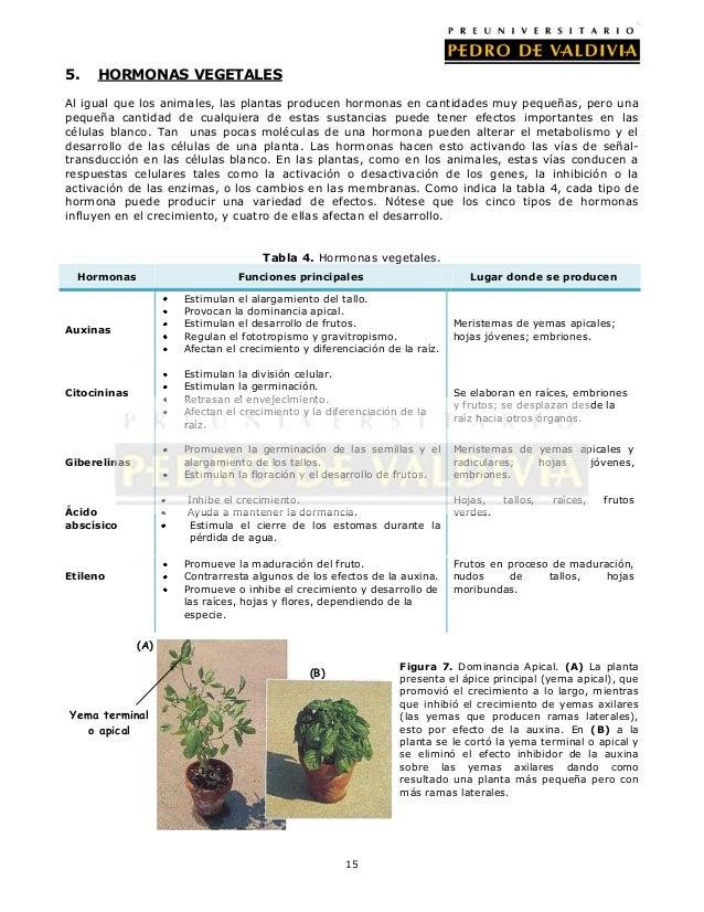 Funciones vitales i hormonas y control hormonal bc11 for Hormonas en las plantas