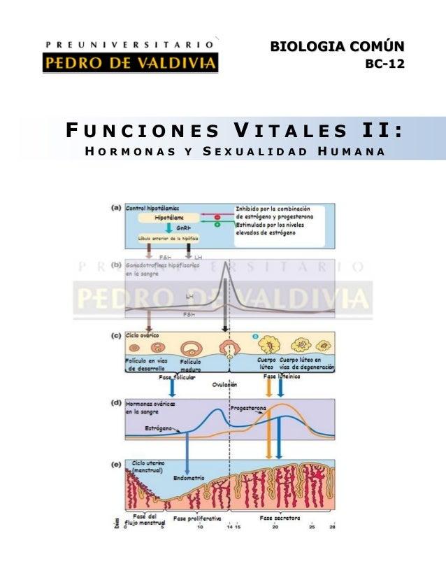 BIOLOGIA COMÚN BC-12  FUNCIONES VITALES II: HORMONAS Y SEXUALIDAD HUMANA
