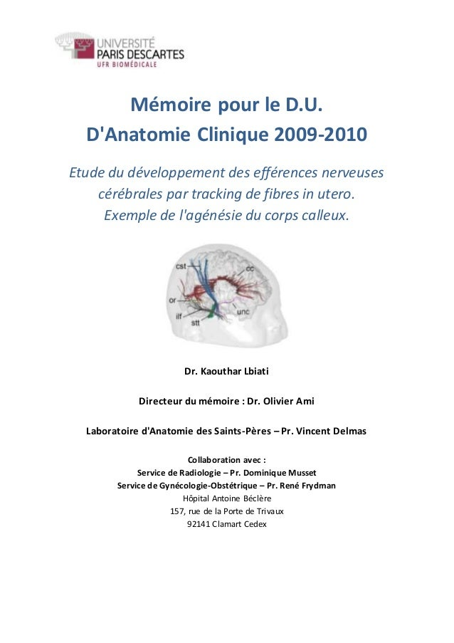 Mémoire pour le D.U. D'Anatomie Clinique 2009-2010 Etude du développement des efférences nerveuses cérébrales par tracking...