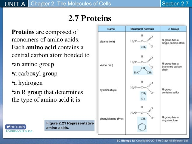 biology 12 - chemistry of proteins