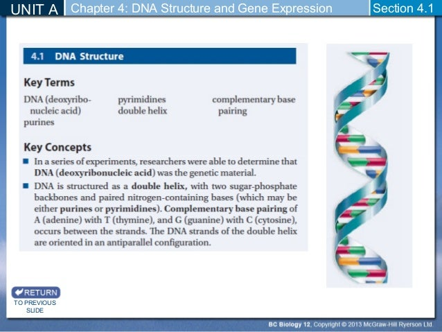 Chapter 12 Dna And Rna Section Review 12 4 Dna Chapter 12