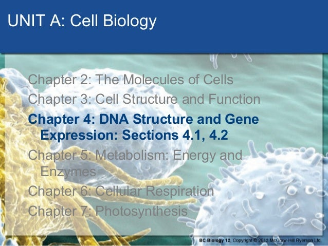 DNA Structure and Replication - Section 4-1 and 4-2