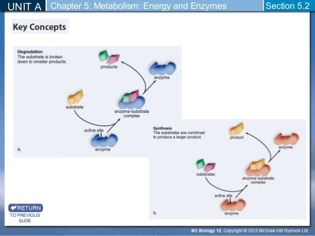 unit 5 energy metabolism Abstract: energy metabolism trials conducted at 21 c temperature with pronghorns  higher maintenance requirements per unit  minimum of 5 hours.