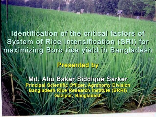 Identification of the critical factors ofIdentification of the critical factors of System of Rice Intensification (SRI) fo...