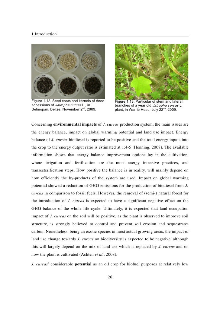 research papers on jatropha curcas Many research papers have been reported that the engine operation on biodiesel mixed with field testing of the performance of jatropha hybrids is undergoing at various research centers.