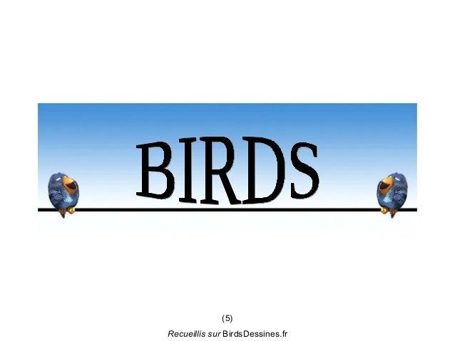 (5)Recueillis sur BirdsDessines.fr