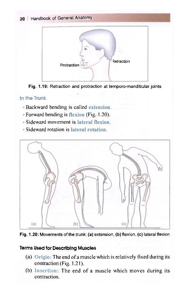 Increíble Bd Chaurasia Human Anatomy Festooning - Anatomía de Las ...