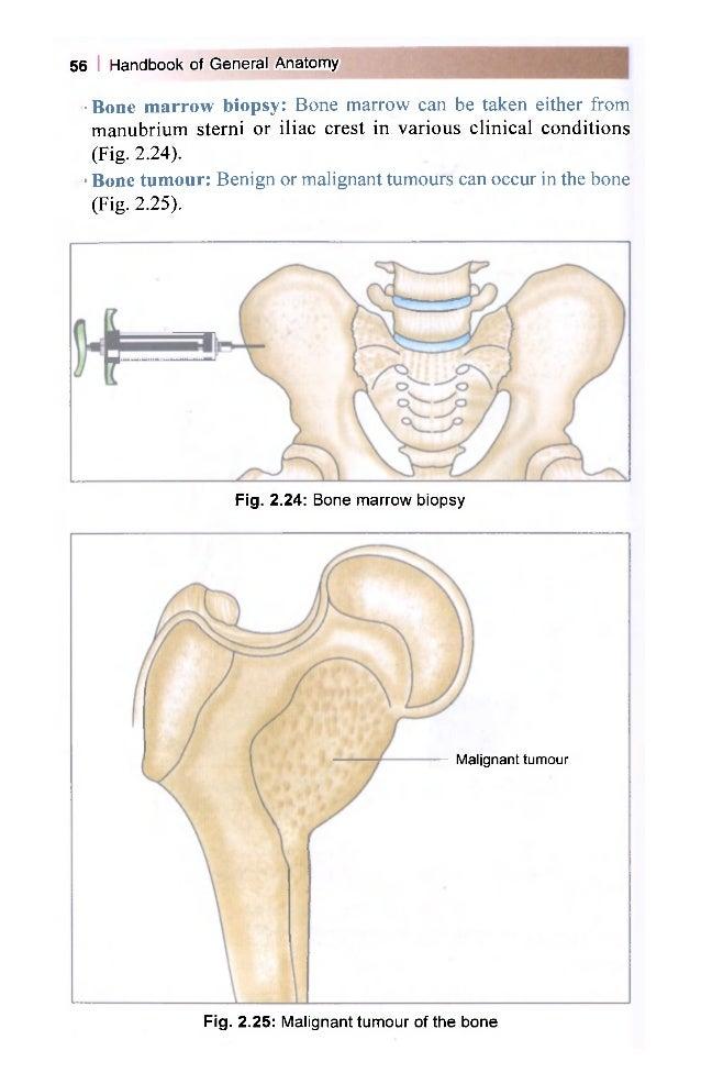 Download BD Chaurasia Handbook Of General Anatomy pdf Free
