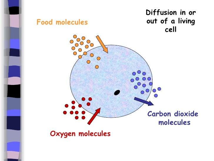 B) Diffusion And Osmosis