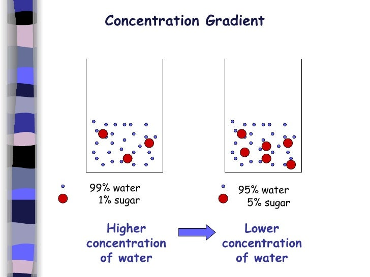 osmosis concentration and water If two solutions of different concentration are separated by a semi-permeable membrane which is permeable to the smaller solvent molecules but not to the osmosis is a selective diffusion process driven by the internal energy of the solvent if pure water were on both sides of the.