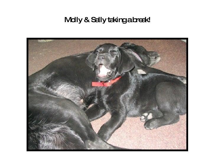 Black Dog Antiques Roanoke Va