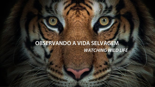 OBSERVANDO A VIDA SELVAGEM WATCHING WILD LIFE