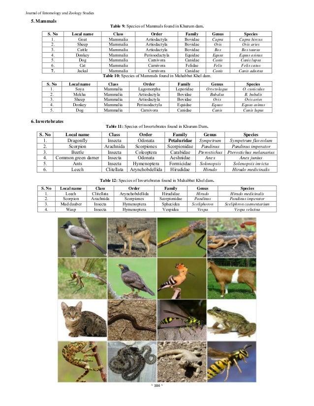 Zoological fauna of Khurum Dam and Muhabbat Khel Dams of Karak