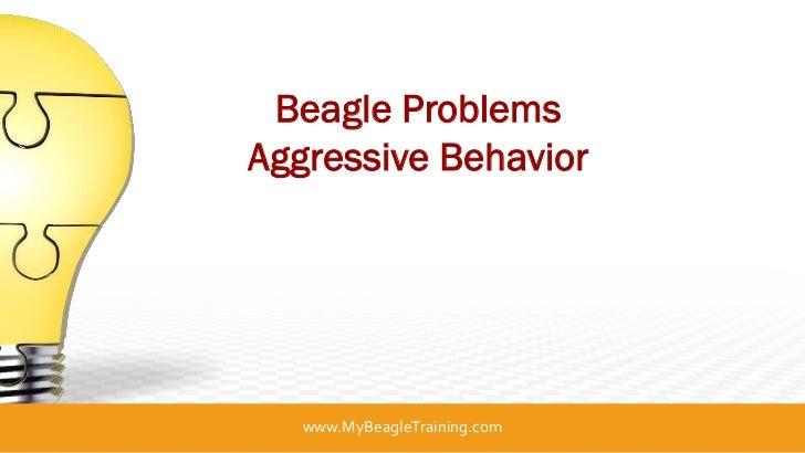 Beagle ProblemsAggressive Behavior   www.MyBeagleTraining.com