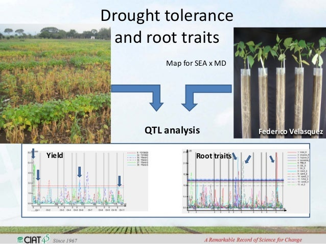 QTL Mapping for Fiber and Yield Traits in Upland Cotton under Multiple Environments