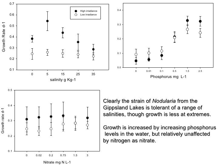 Clearly the strain of  Nodularia  from the  Gippsland Lakes is tolerant of a range of  salinities, though growth is less a...