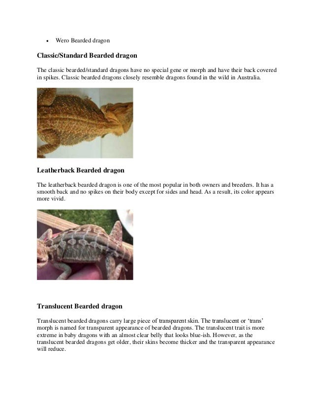 Bearded dragon color, morphs and patterns