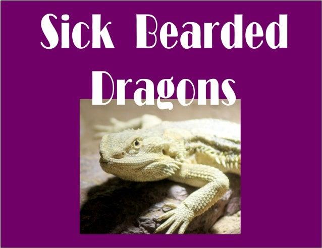 Bearded Dragon Illnesses