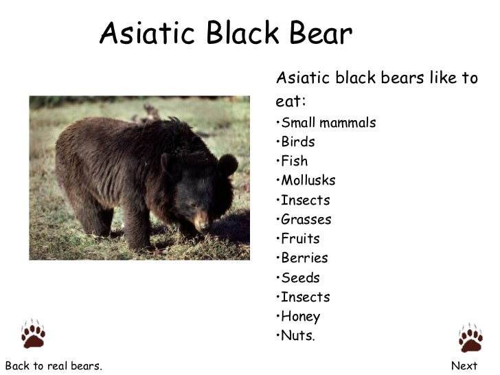 Diagram Of Asian Black Bear Auto Electrical Wiring Diagram