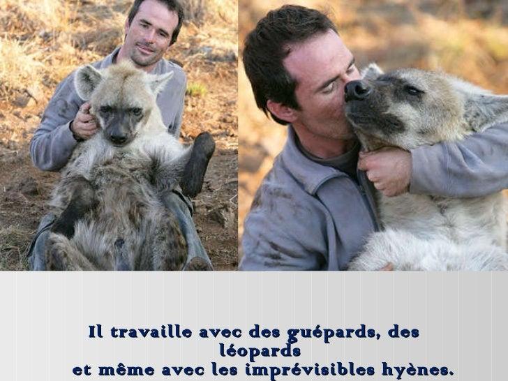 Il travaille avec des guépards, des léopards  et même avec les imprévisibles hyènes.