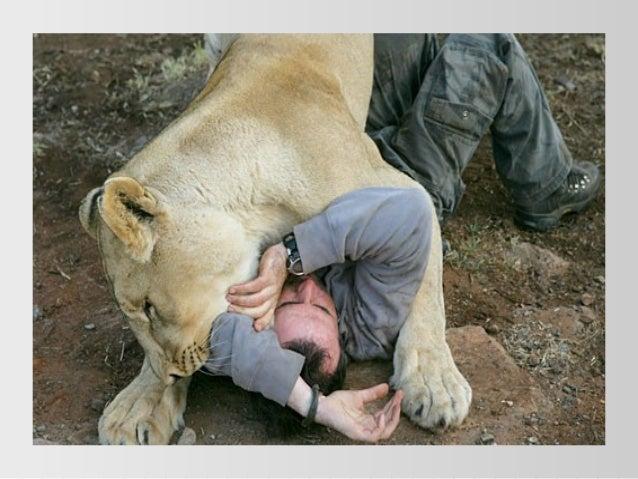 Beaute sauvage puis Kevin Richardson l'ami des lions