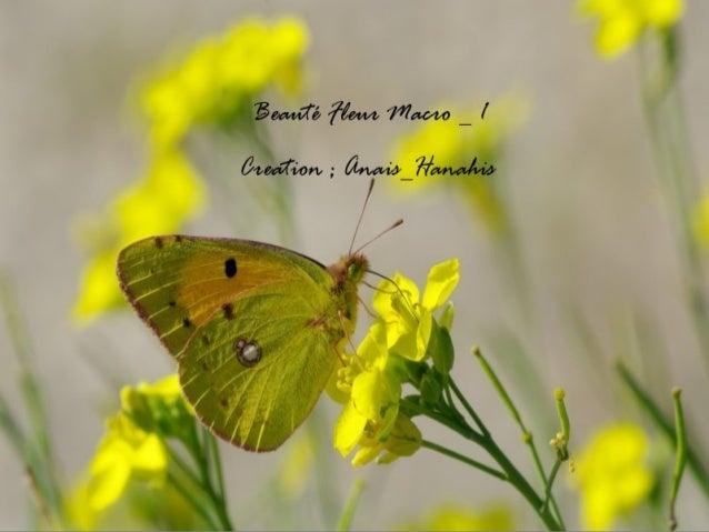 Beauté fleur macro   1   by anais-hanahis