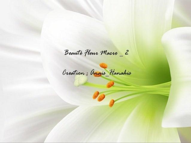 Beauté fleur macro   2   by anais_hanahis