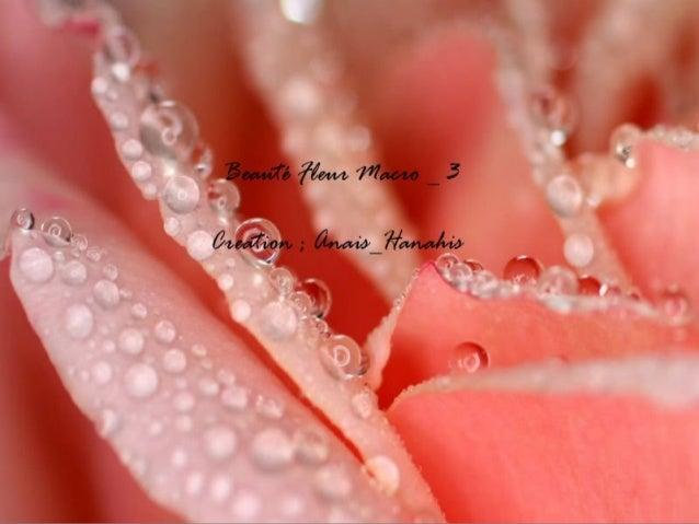 Beauté fleur macro   3   by anais_hanahis