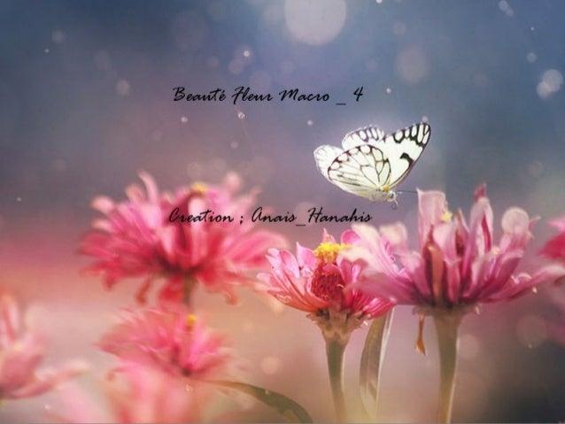 Beauté fleur macro   4   by anais_hanahis