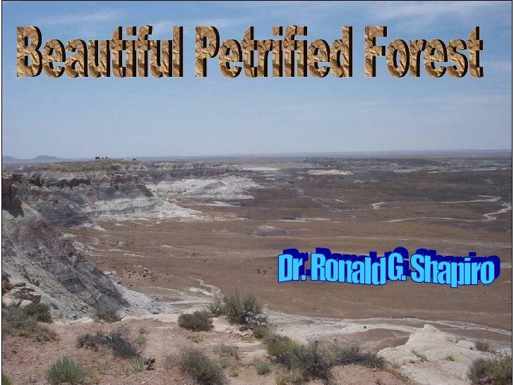 Dr. Ronald G. Shapiro  November 30, 2008 Beautiful Petrified Forest Dr. Ronald G. Shapiro