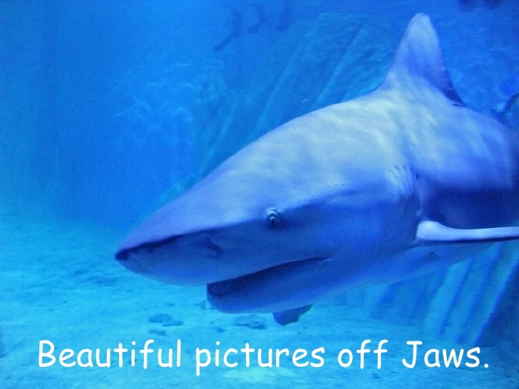 Beautiful pictures off Jaws.