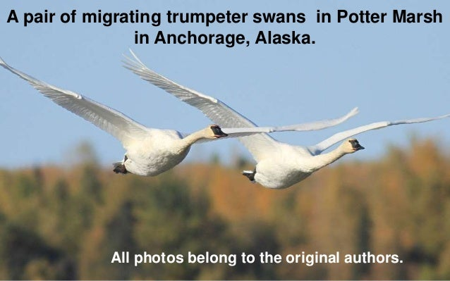 Beautiful Animal Migration In Pictures
