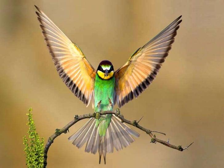 Bird Pictures Amazing Birds: Beautiful Birds