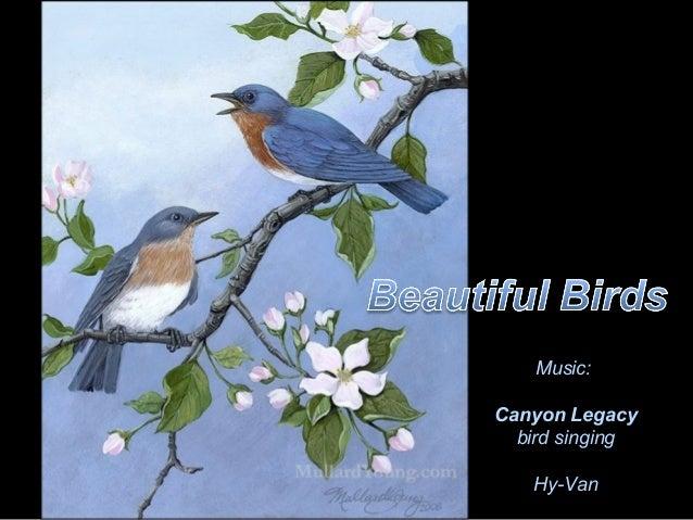 Music:Canyon Legacy  bird singing   Hy-Van