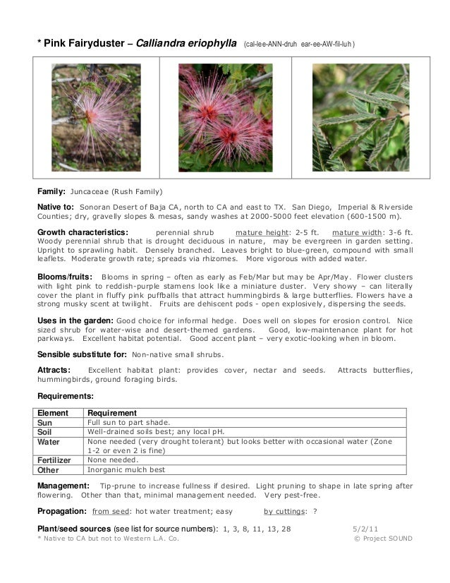 * Pink Fairyduster – Calliandra eriophylla (cal-lee-ANN-druh ear-ee-AW-fil-luh ) Family: Juncaceae (Rush Family) Native to...