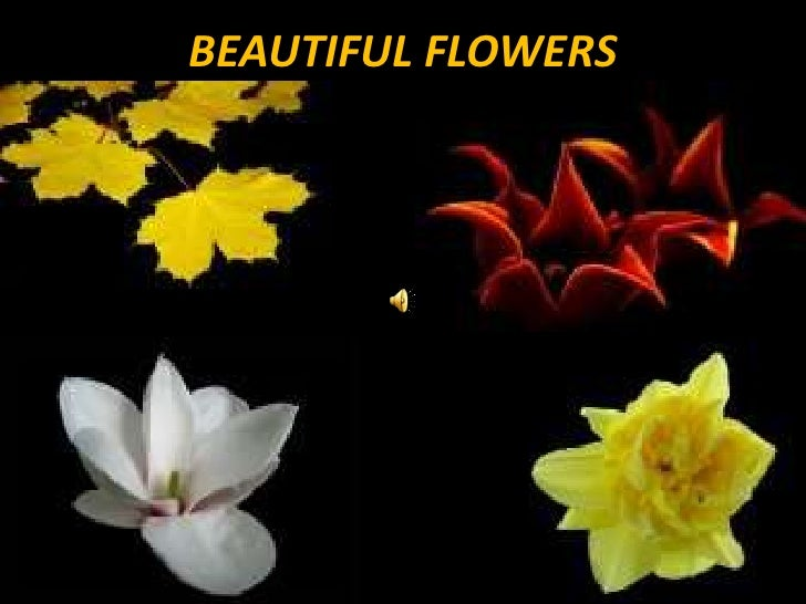 BEAUTIFUL FLOWERS<br />