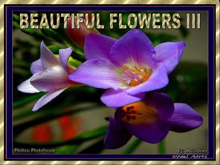 BEAUTIFUL FLOWERS III Photos: Photoforum By: JRCordeiro