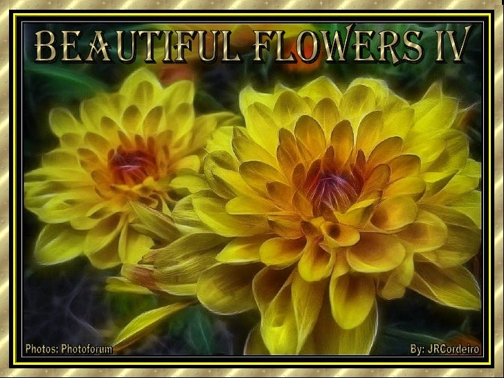 beautiful flowers iv Photos: Photoforum By: JRCordeiro