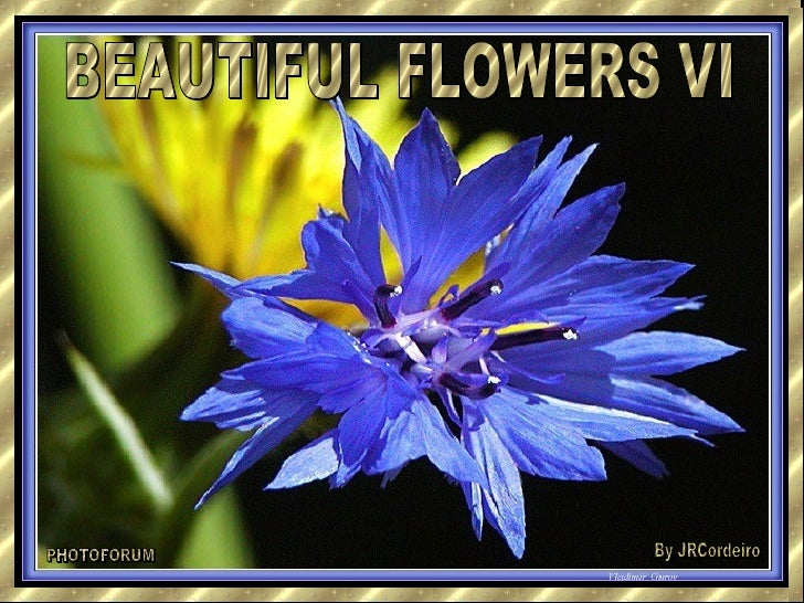 BEAUTIFUL FLOWERS VI PHOTOFORUM By JRCordeiro
