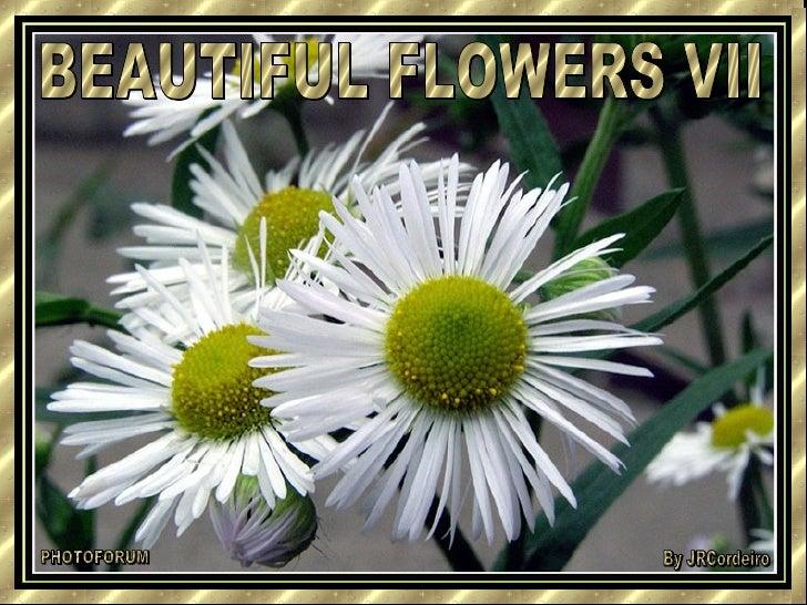 BEAUTIFUL FLOWERS VII PHOTOFORUM By JRCordeiro