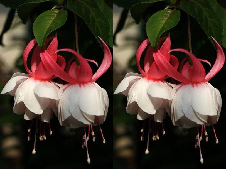 Beautiful Fuchsia Queen Slide 3