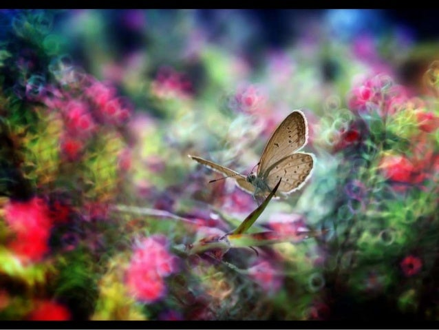 Beautiful Garden Insect- Photographer Nordin Seruyan