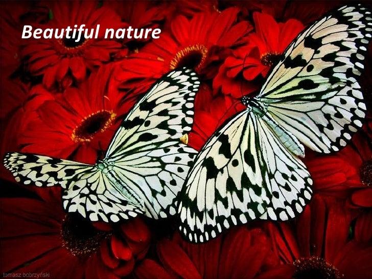 Beautiful nature<br />