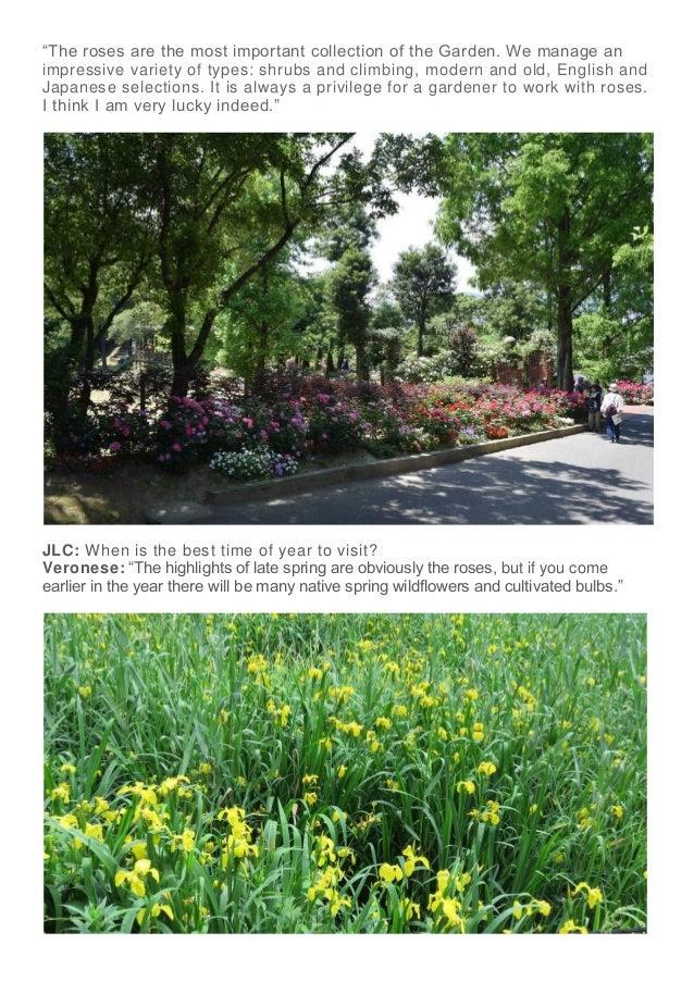 Beautiful Roses At The Tsuzuki Gakuen English Garden
