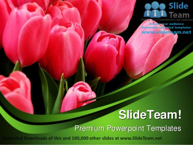 Beautiful tulips beauty power point templates themes and
