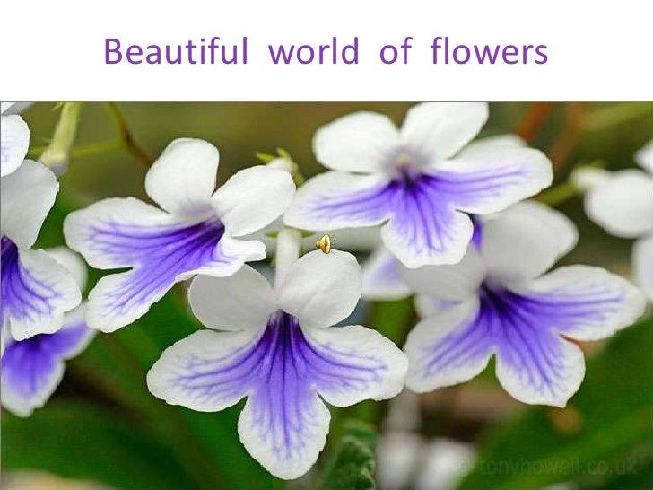 Beautiful  world  of  flowers<br />