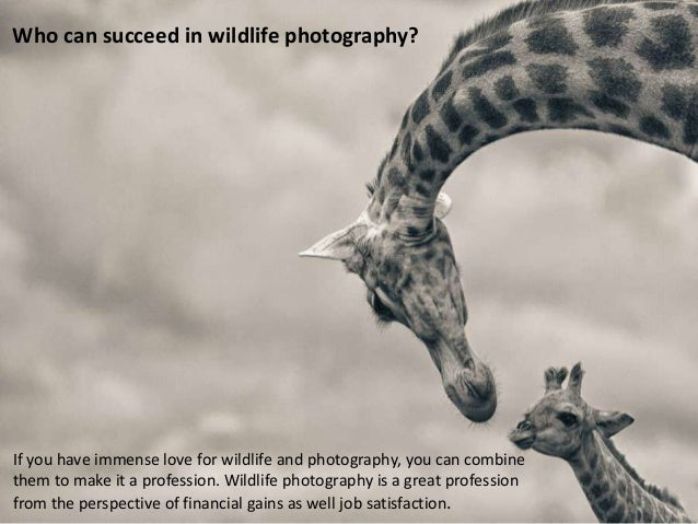 Who can succeed in wildlife photography?  If you have immense love for wildlife and photography, you can combine them to m...